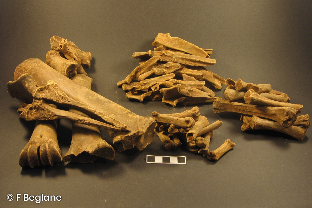 Archaeological animal bones